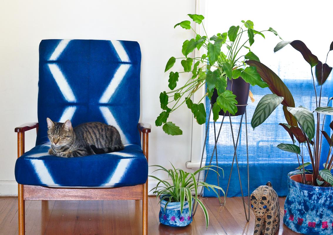 Arashi, enjoying MY chair. Get off my chair, cat!